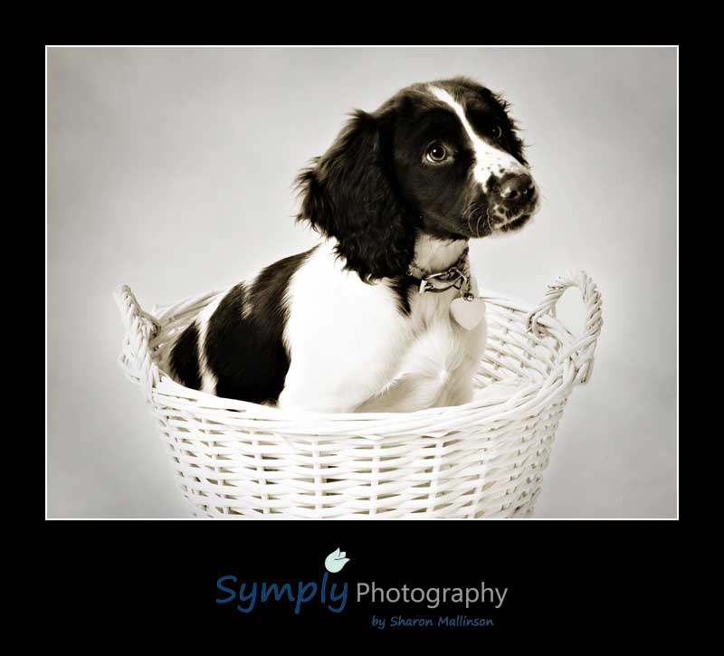 Pet photographer in Sleaford
